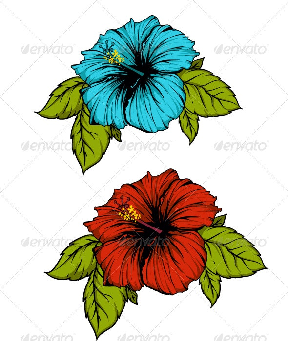 Hibiscus flower - Flowers & Plants Nature