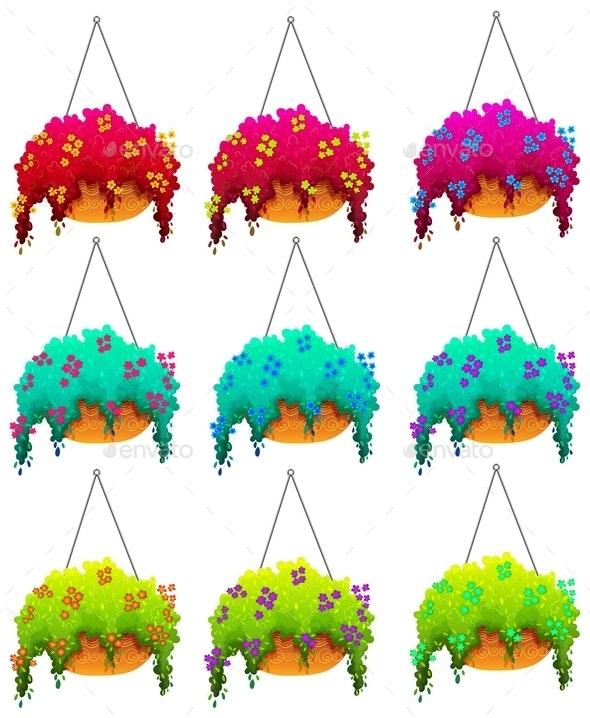 Hanging Houseplants - Flowers & Plants Nature