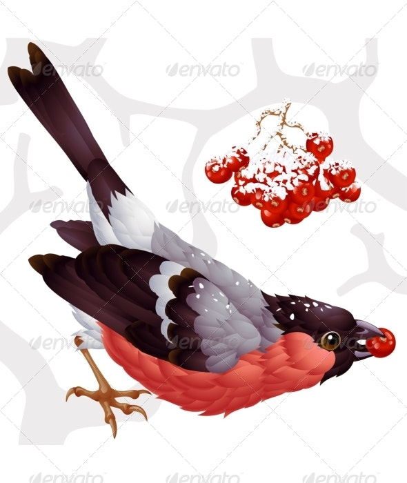 Vector bullfinch and ashberry - Animals Characters