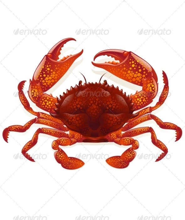 Red crab - Animals Characters