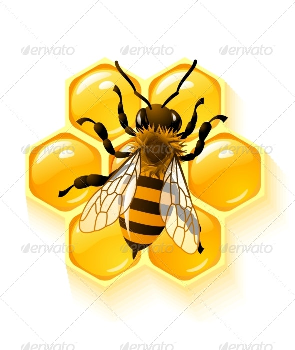Vector bee and honeycombs - Characters Vectors
