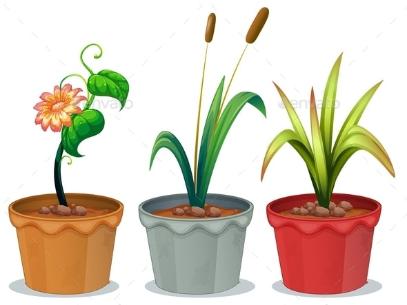 Potted Plants - Flowers & Plants Nature
