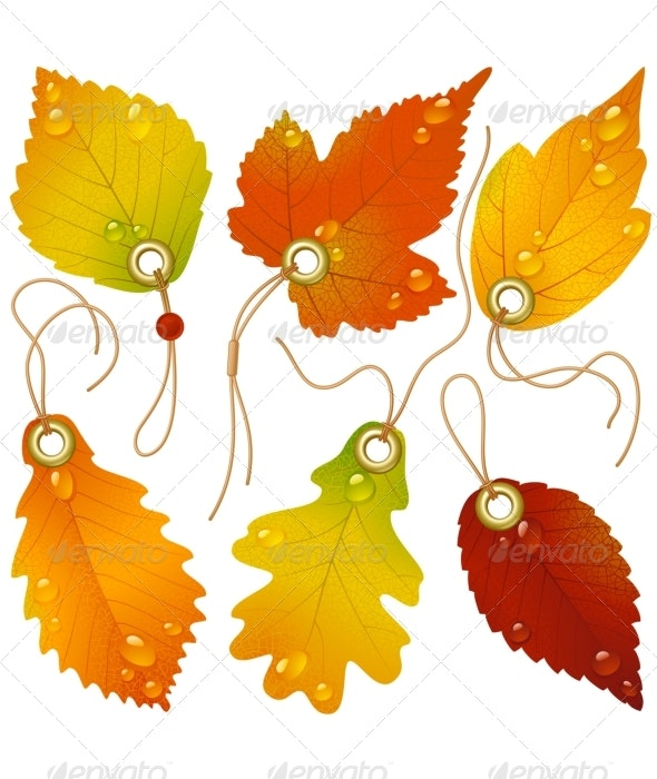 Autumnal discount. Vector fall leaves - Decorative Symbols Decorative