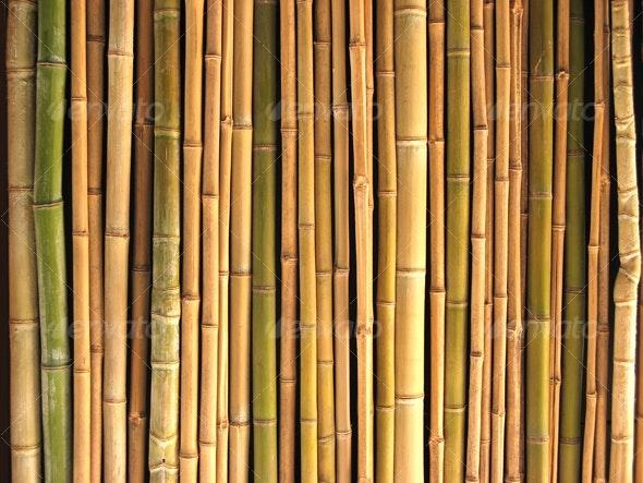 Reeds - Nature Textures