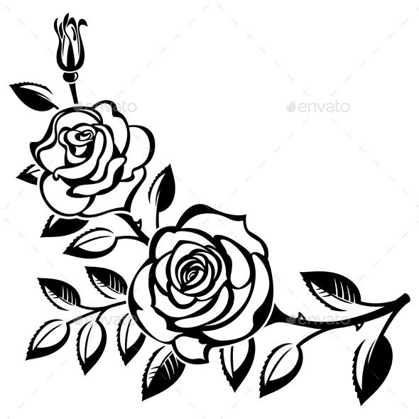 Branch of Roses - Flowers & Plants Nature