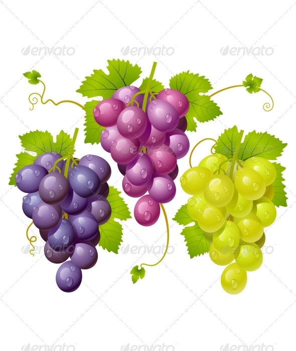 Three cluster of grapes - Food Objects