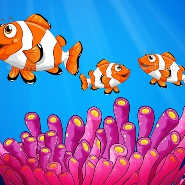 Clownfishes Under the Sea