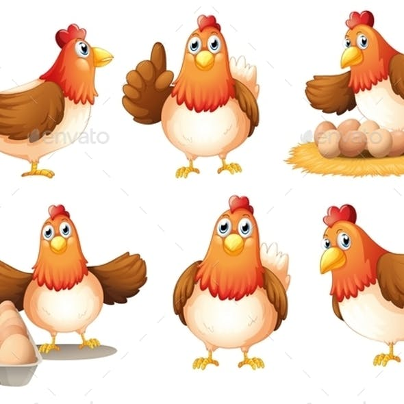 Chickens with Eggs
