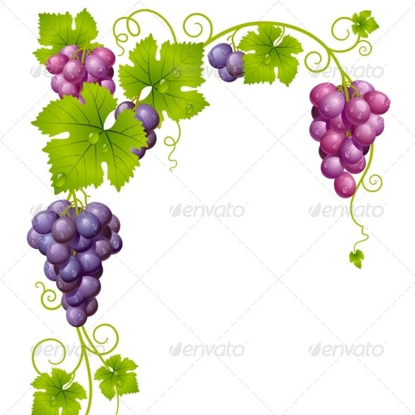 Vector grape frame 03