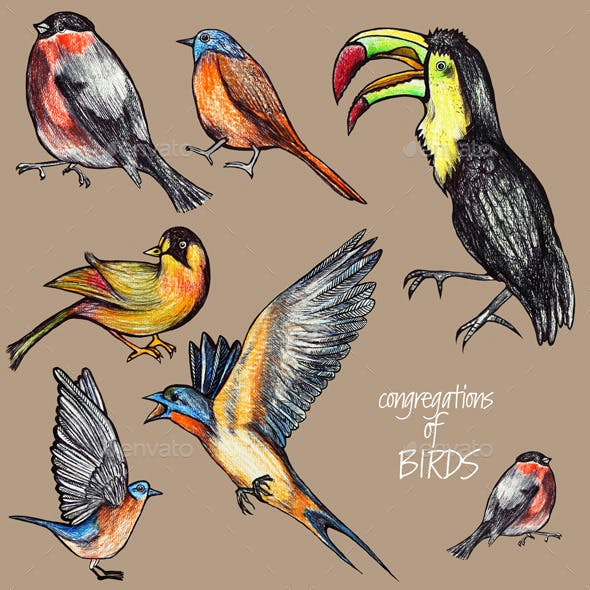 Congregations of Birds