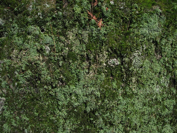 :: wall of Lychen  - Nature Textures