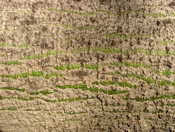 Bark 04 - Nature Textures