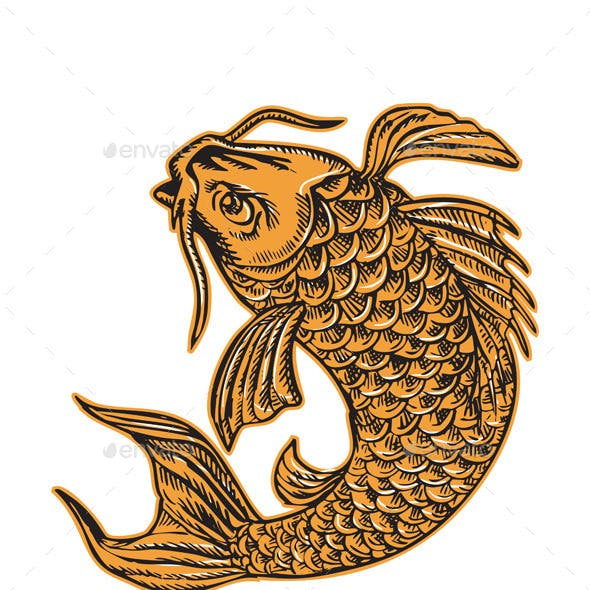 Koi Nishikigoi Carp Fish Etching