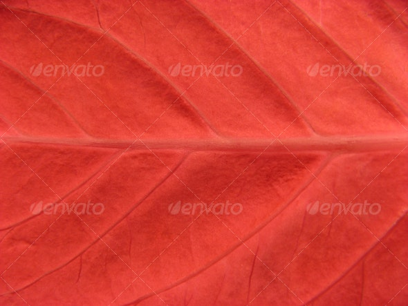 Red leaf texture - Nature Textures