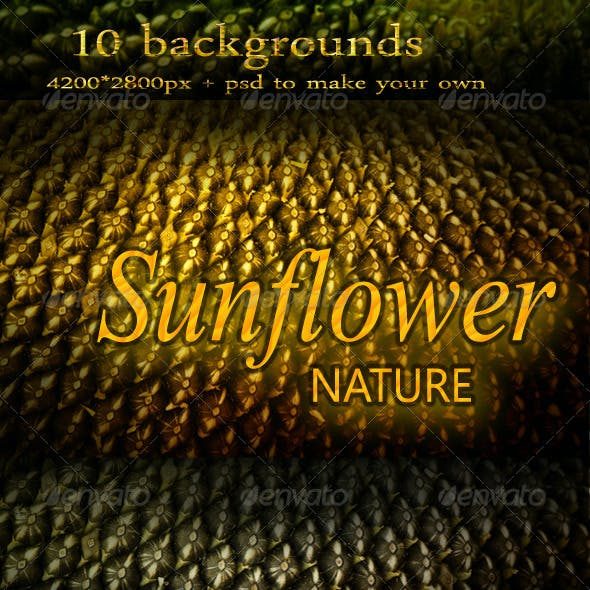 Abstract Nature Backgrounds with Sunflower Seeds