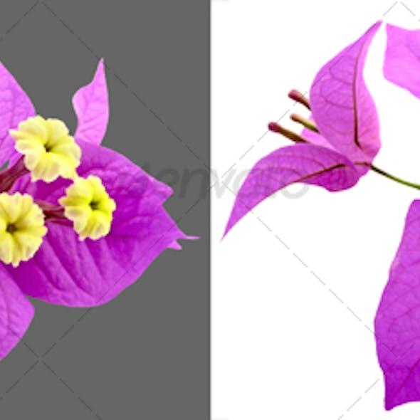 Santa Rita Flowers