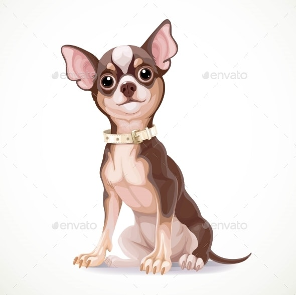 Cute Little Chihuahua Dog Wearing a Collar Vector - Animals Characters