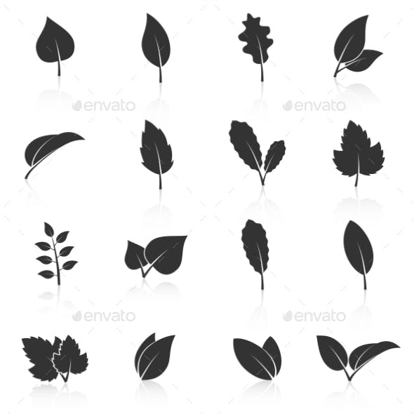 Set Of Leaf Icons On White Background