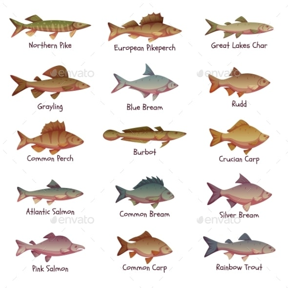 Vector Set Of Most Popular Freshwater Fishes - Animals Characters