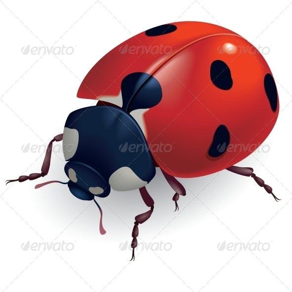 Ladybug. (Lat. Coccinellidae)