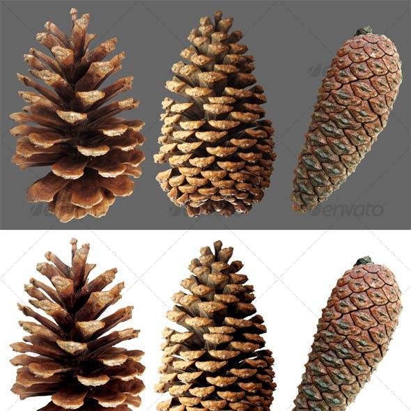 Closed pine cone 3