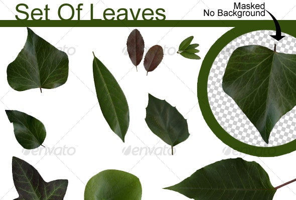 Set Of Leaves - Nature & Animals Isolated Objects