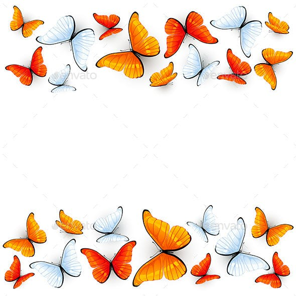 Red and White Butterflies on White Background
