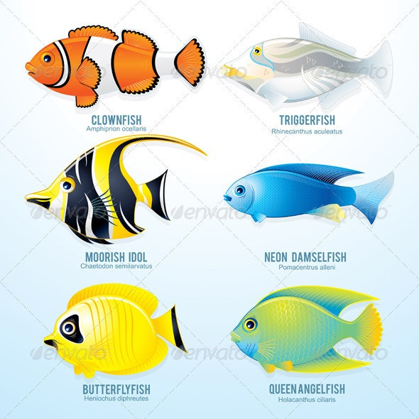 Tropical Fish - Characters Vectors
