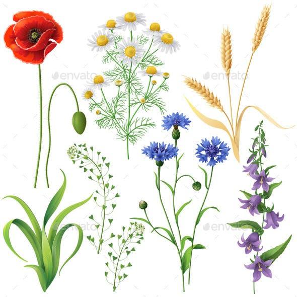 Wildflowers  Set
