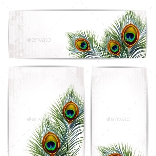 Set of Peacock Feathers with Space for Text