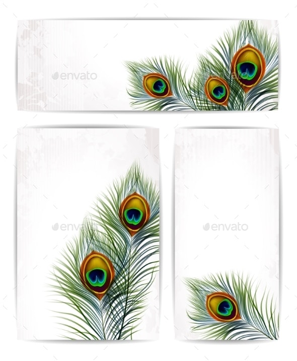 Set of Peacock Feathers with Space for Text - Backgrounds Decorative