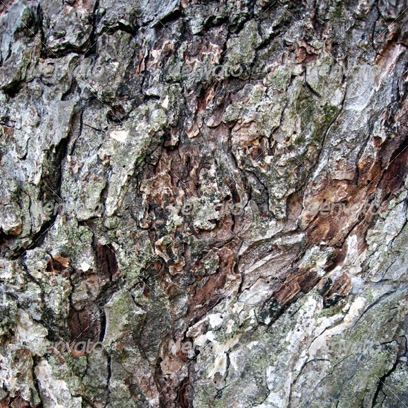 Mossy Bark Texture