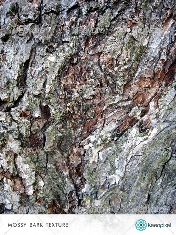 Mossy Bark Texture - Nature Textures