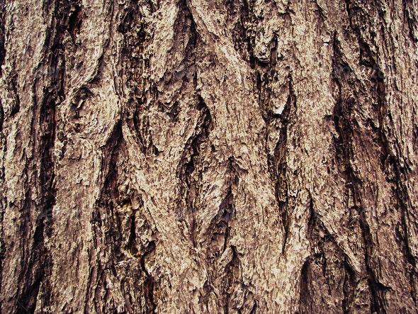 :: WOOD 2 - Wood Textures