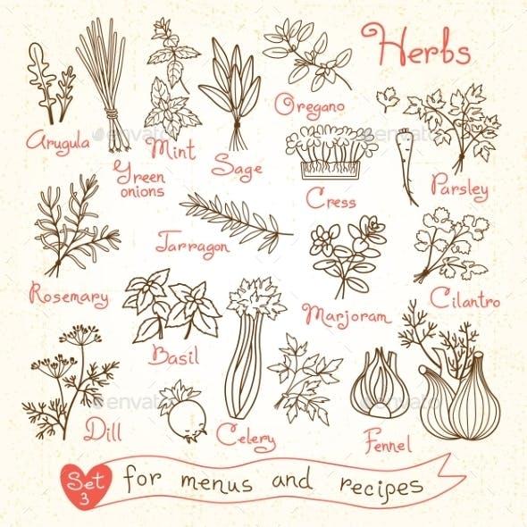 Set Drawings Of Herbs For Design Menus, Recipes