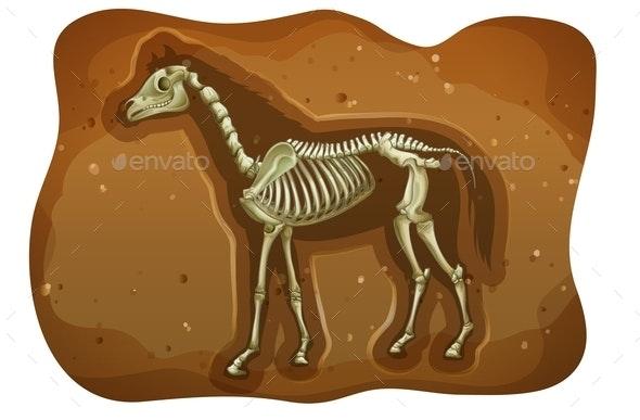 Fossil - Miscellaneous Conceptual