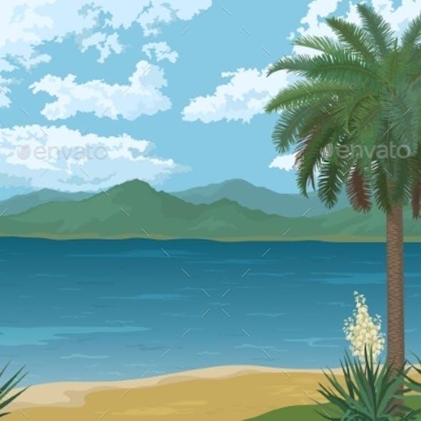 Palm on Ocean Beach