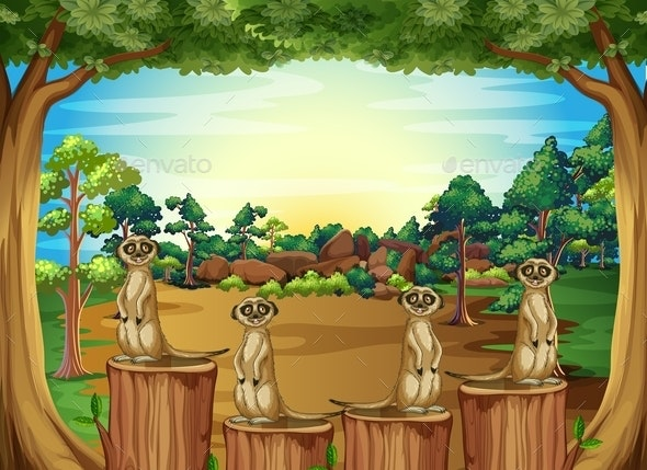 Meerkat - Miscellaneous Conceptual