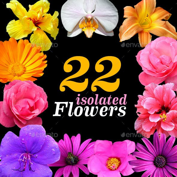 22 Isolated Flowers