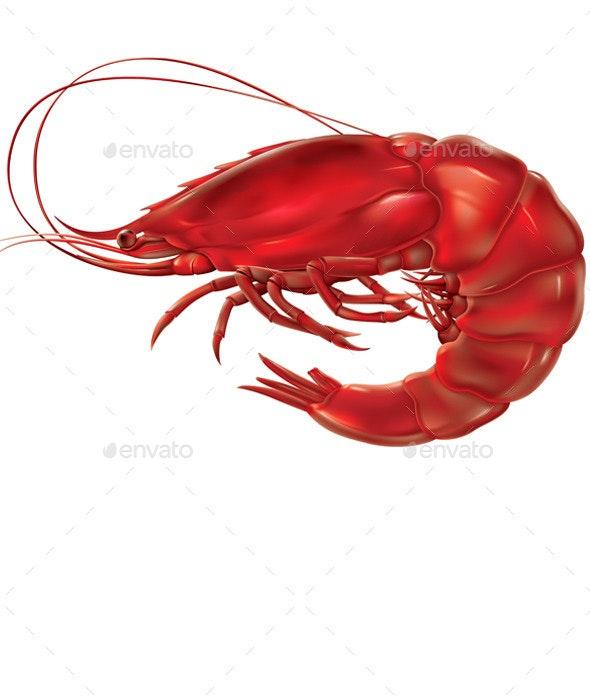 Shrimp - Food Objects
