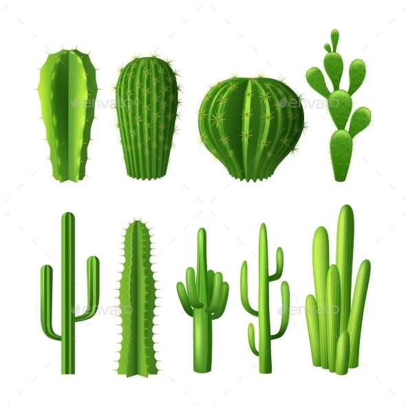 Cactus Realistic Set - Flowers & Plants Nature