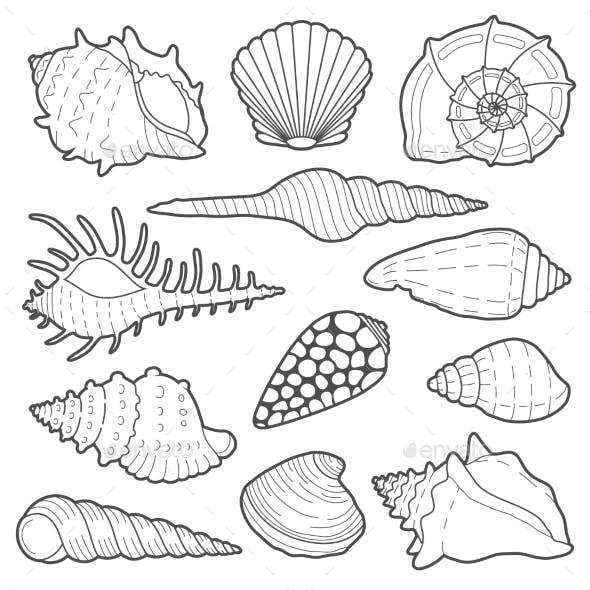 Sea Shells Vector Icon Set