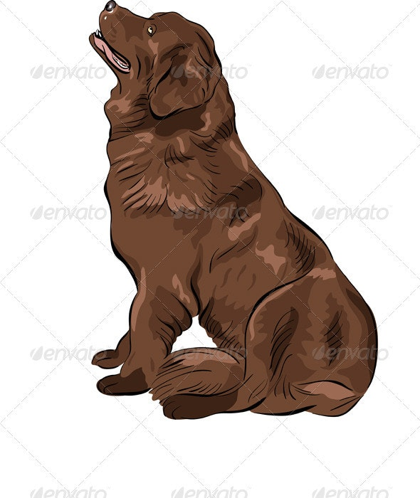 Vector Color Sketch Dog Newfoundland breed  - Animals Characters