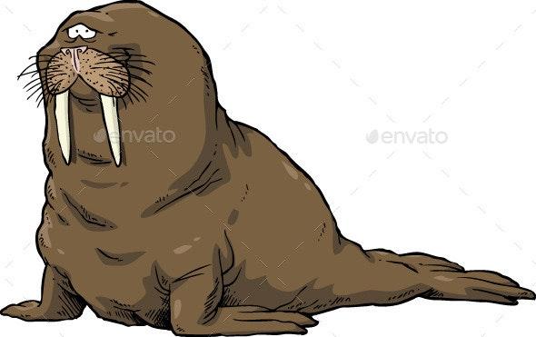 Walrus - Animals Characters