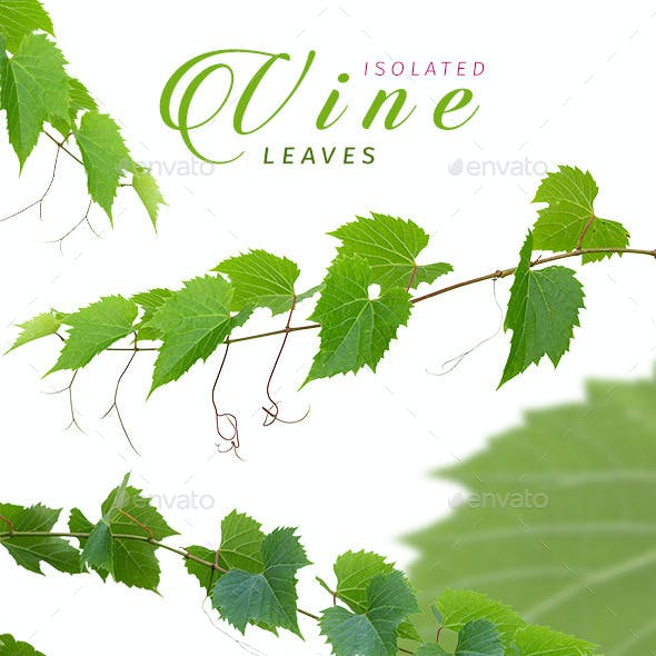 Isolated Vine Leaves