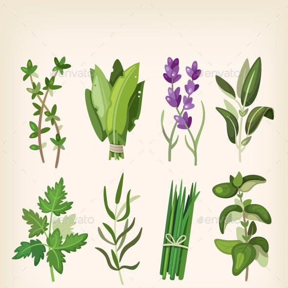 Seasoning and Dressing Herbs