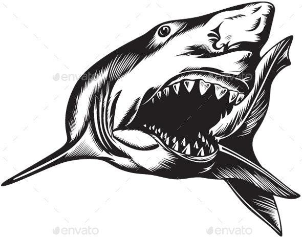 Aggressive Shark - Animals Characters