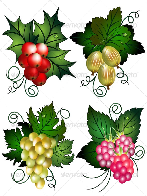 Set of berries - Nature Conceptual