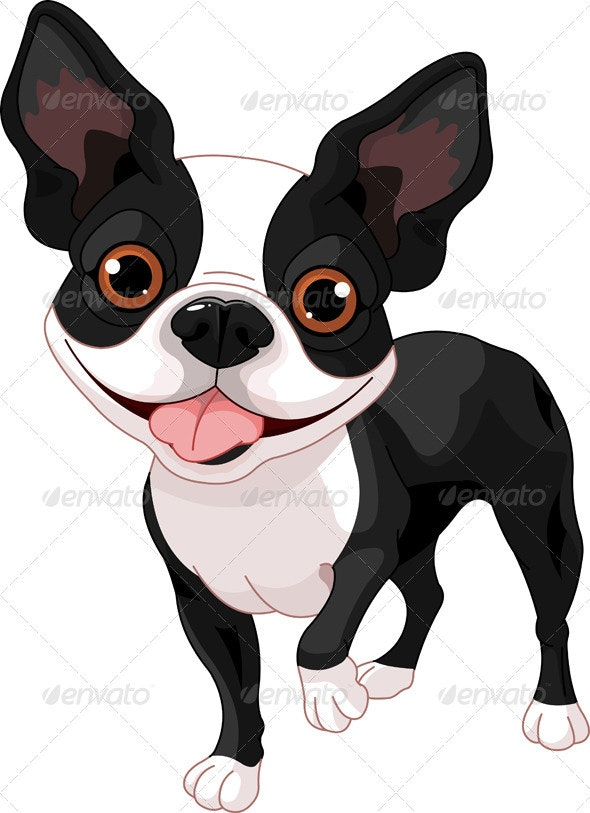 Boston Terrier - Animals Characters
