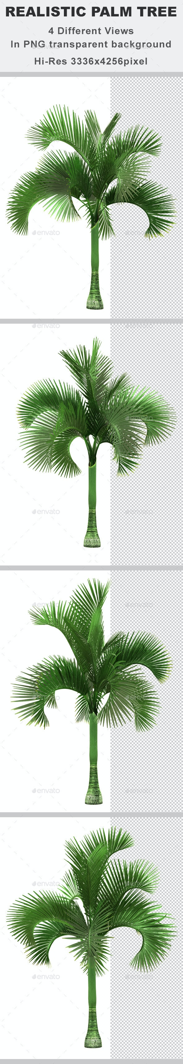 4 Realistic Palm Tree - 3D Renders Graphics